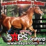 corridos-caballos-y-gallos