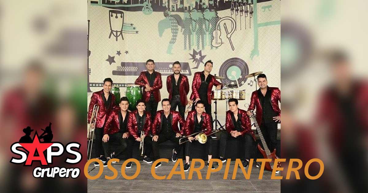 Oso Carpintero