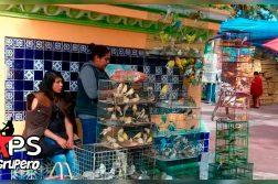 Feria de las Aves