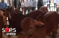 """Se alista todo para """"La Expo Ganadera de la Feria Chiapas 2020"""""""